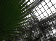 nature, victorian, palm, palmenhaus, Schoenbrunn, palace, garden, tropical, Vienna, Austria